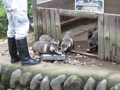 20170923桐生が岡動物園blog07.jpg