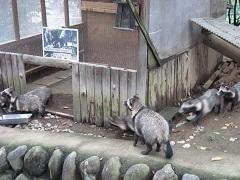 20170923桐生が岡動物園blog08.jpg